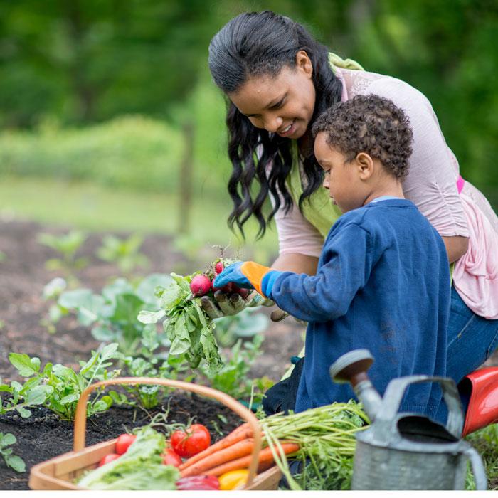 plant a family garden